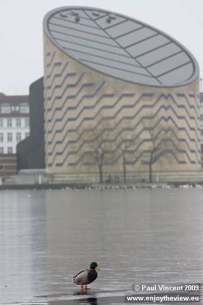 A duck walks on the edge of an ice sheet, in front of the Tycho Brahe Planetarium.