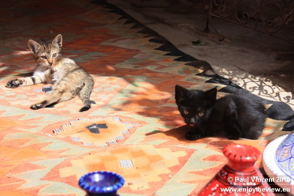 Two small kittens play in the sun in Sousse.
