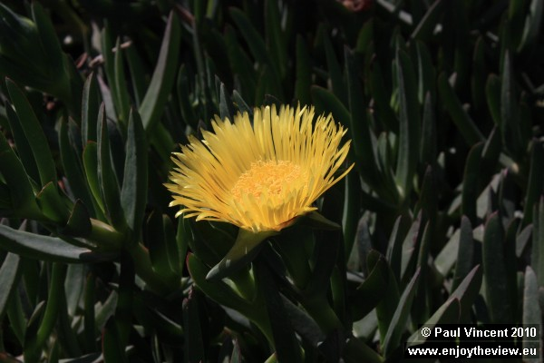 A yellow flower in the sunshine.