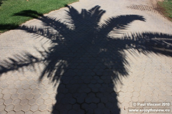 The dark shadow of a palm tree in the bright afternoon sun.